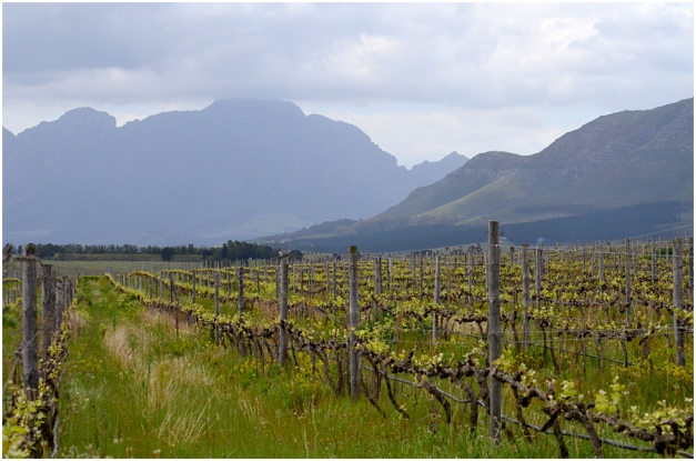 Cape mountains and Cape winelands... a unique beauty.